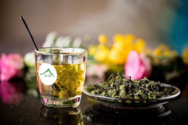 [Đầy đủ] Tác dụng của hoa tam thất với sức khoẻ con người