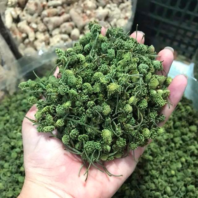 [Bật mí] Nụ hoa tam thất trồng ở đâu cho chất lượng tốt nhất?
